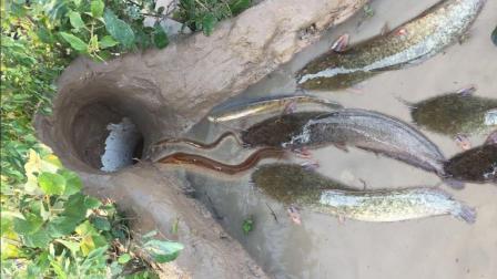 农村大神的捉鱼神器, 不用动手, 塘角鱼和黄鳝排着队着急往里跑