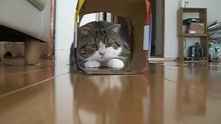 喵星人把头又套进了盒子里了