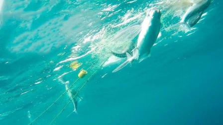 实拍: 原来渔网是这么捕鱼的, 终于看清鱼群游进渔网的整个过程了