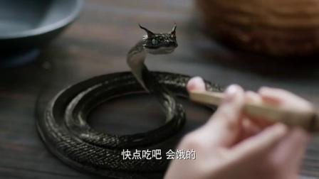 杨幂帮小蛇治疗伤口, 小蛇的内心欲哭无泪, 吃生肉这段真是绝了!