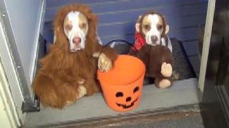 可爱狗狗搞笑视频 不给糖果就捣乱