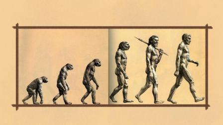 很多人都错了  人的进化历程不是这样的