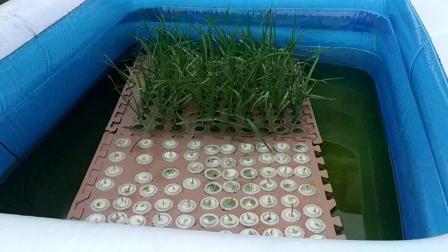 什么蔬菜可以水培
