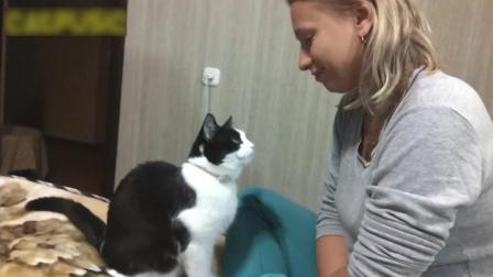 萌萌的喵星人给主人爱的吻