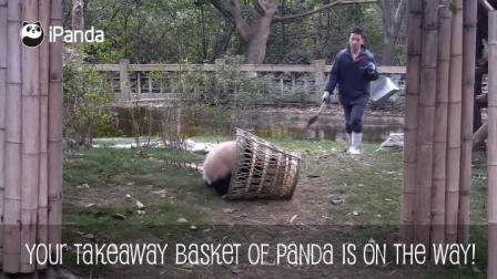 调皮的熊猫宝宝自己跑到了篮子里面