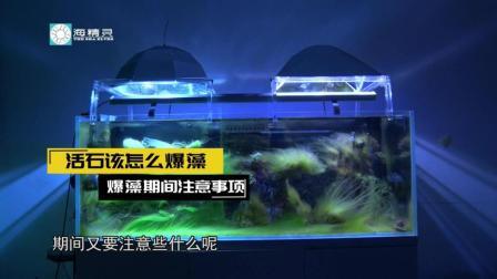 第⑤分钟: 如何让活石爆藻变得更有效率?