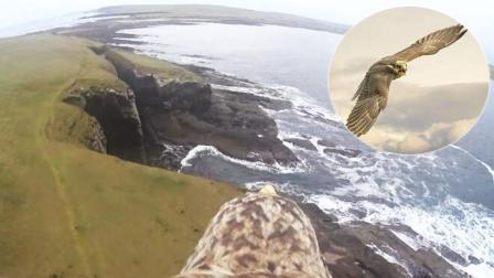 这才是真正的鸟瞰! 养鹰人给鹰背装上摄像头看美景