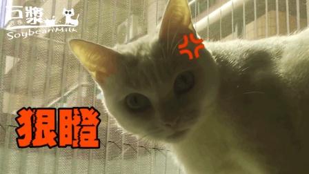 猫奴吓走猫咪豆浆的猎物, 豆浆被气得骂人