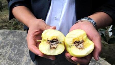 碰见这样水果快扔掉, 每吃一口都在喂癌细胞, 肠胃迟早会垮掉
