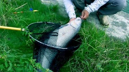 农村男子捕鱼两分钟钓一条大鱼首次见过这种神速捕鱼视频 陶志