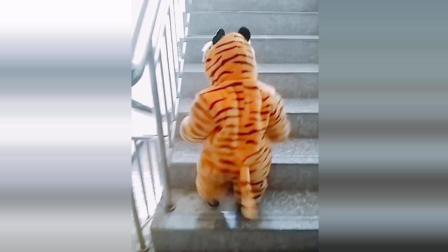 小老虎宝宝爬楼梯, 接下来宝宝的反应太可爱了!