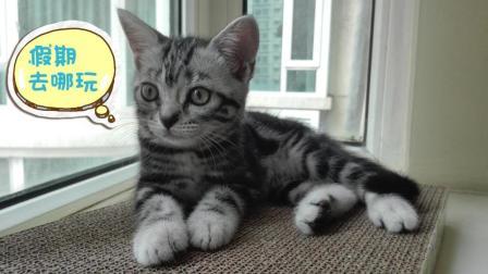 猫兄妹的撩骚日常-猫妹妹给猫哥哥洗头啦! #冬日吸猫#