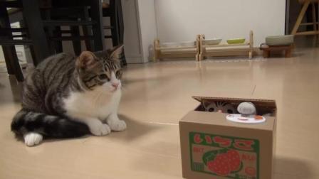 喵星人对猫形储蓄罐的玩具猫充满了好奇