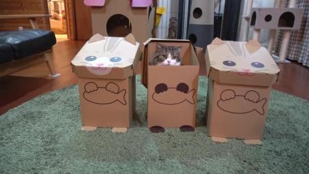 喵星人看到了三个猫咪盒子自己也跳了进去