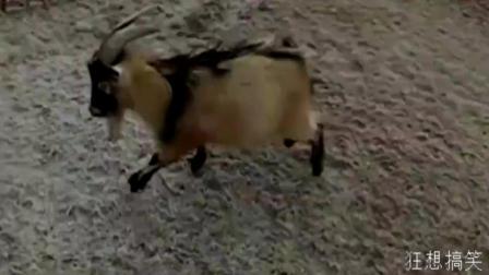 路人走路全靠滑, 连动物也忍不住滑上了!