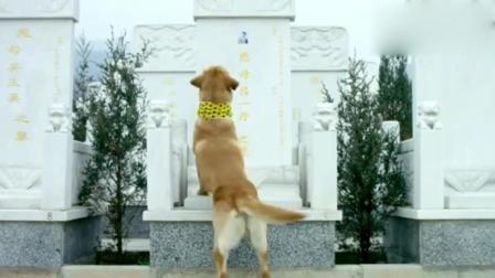 主人去世, 狗狗趴在墓碑上喊妈妈, 好感人