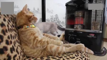 冬天来了动物们也有自己的取暖方式  你的取暖方