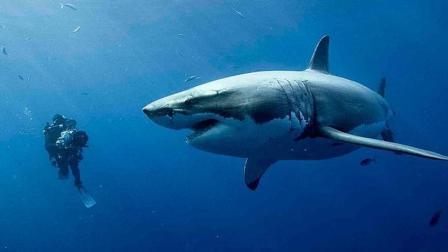 视频段子狗 影评恐怖片《鲨海》看了可能会得深海恐惧症!