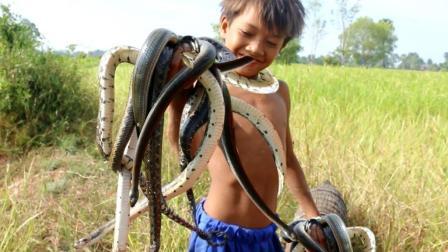 小男孩捉蛇, 用鱼笼加点诱饵在野外捉蛇一天捉好多条, 真牛了