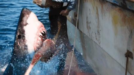 3分钟看完英国惊悚冒险片《鲨海》将紧张刺激的氛围表现得淋漓尽致!