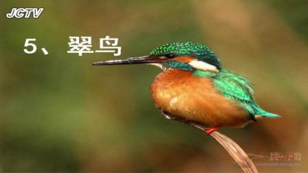 学习描写动物外形以《翠鸟》为例—语文—小学—三年级—张艳—渭南市蒲城县祥塬学校微课平台