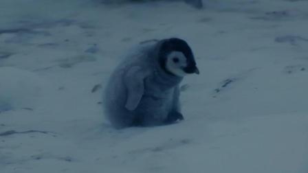 小企鹅找不到妈妈, 在零下40℃暴风雪中如何存活, 这一幕太感人!