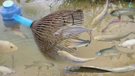 农村美女水渠边捕鱼, 特制神奇的自动捕鱼系统, 一下子收获大群鱼