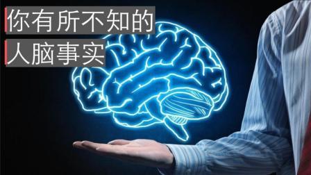 你有所不知的大脑事实