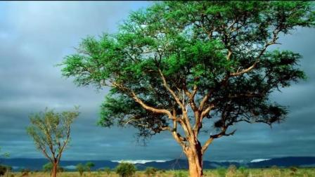3D素描教学, 如何在平面上画出立体的大树, 简单易学