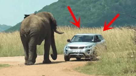 眼瞅着大象越来越近, 夫妻俩却只顾着拍照, 20秒后悲剧开始了
