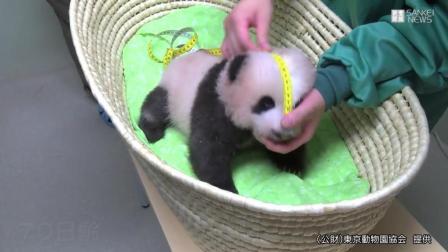 旅日的超级网红熊猫香香