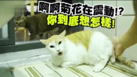 给猫咪擦屁股, 猫咪连声惨叫