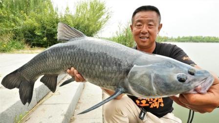 《游钓中国》第三季第30集 船送滑漂放竿太白湖 不在窝点也能频频中鱼