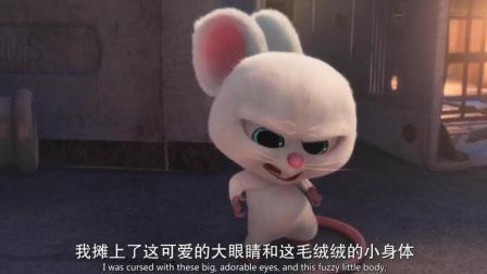 萌翻天的小白鼠, 可爱的外表下内心是个纯爷们, 可他真的很可爱啊