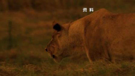 杨澜访谈录174: 朱波特夫妇: 非洲草原的守护者
