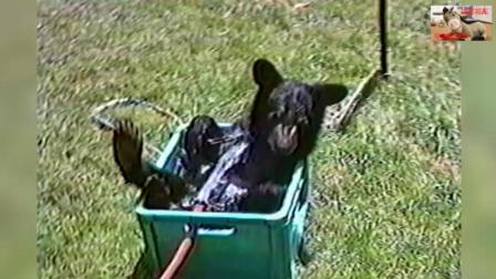搞笑动物, 萌宠们要洗澡了哈哈