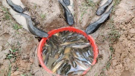 柬埔寨妹子河边抓鱼, 挖开三条水渠放个垃圾篓, 鱼儿排着队往前飞