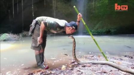野外捕蛇高手: 保护世界上最致命的毒蛇, 牛!