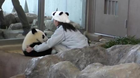 熊猫粑粑被挂树上了都下不来了