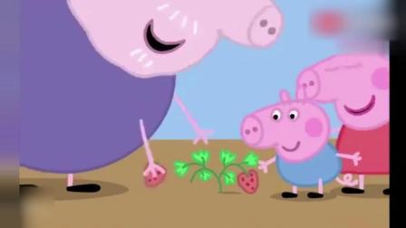 猪爷爷发现佩奇中的草莓结果啦, 佩奇和乔治好开心啊