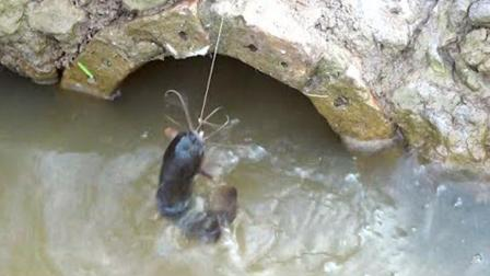 农村小伙出水口这样钓鱼, 一个鱼钩一条绳, 一个人拉都拉不过来