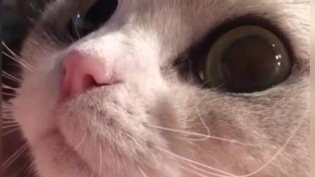 猫咪睡觉前和妹子聊天, 这奶音太甜啦!