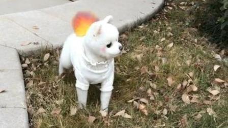 路上遇到一只小狗, 博美假模假式吓唬它, 主人忍不住笑出声来
