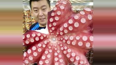 美食达人吃深海章鱼, 好漂亮的章鱼足!