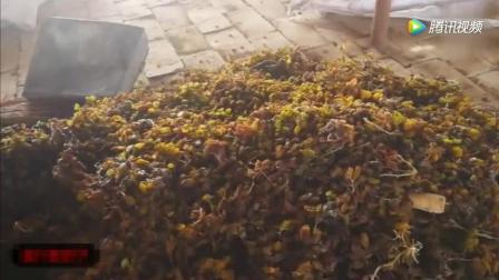 吐鲁番葡萄晾房葡萄干不要钱随便吃
