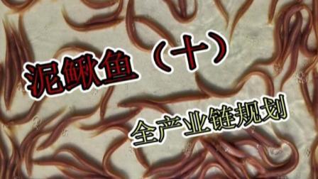 洄水王老师 观赏鱼 热带鱼 繁殖 技术 泥鳅鱼10