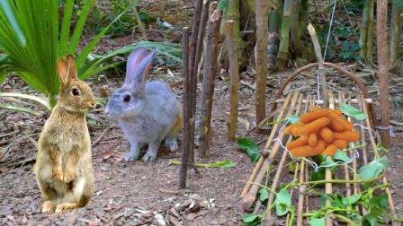 9岁女孩进山捉野兔, 自制陷阱放进诱饵, 竟捉到这大货当晚餐