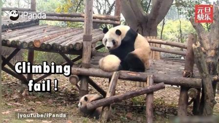 萌萌的熊猫宝宝祝大家元旦快乐