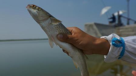 《游钓中国》第三季第31集 鸢都寻觅新体验  虾池也能钓海鱼