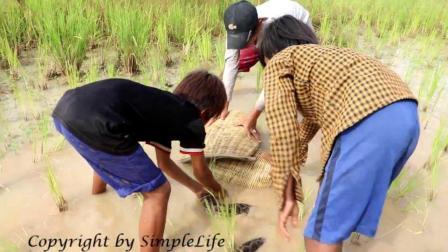 3个男孩一起在田里捞鱼, 却遇到一条大蟒蛇, 最后他们却这样玩耍